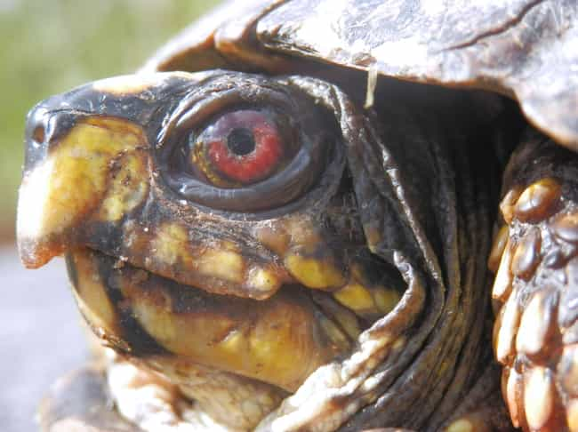 This Turtle, Who Has Had About... is listed (or ranked) 3 on the list 12 Turtles Who Are Just Sick of It