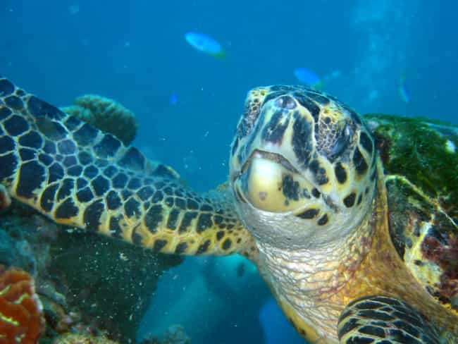 This Turtle, Who Isn't Sur... is listed (or ranked) 4 on the list 12 Turtles Who Are Just Sick of It