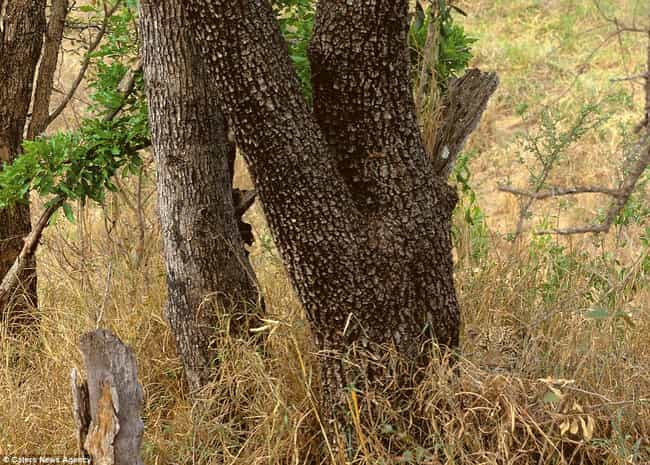 This Nice, Safe African Plain is listed (or ranked) 2 on the list Wheres Waldo: Nature Edition