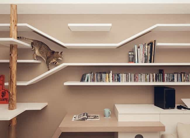 This Cat Who Really Loves What... is listed (or ranked) 1 on the list 18 Cats Who Find Your Bookshelf More Comfy Than a Cat Bed