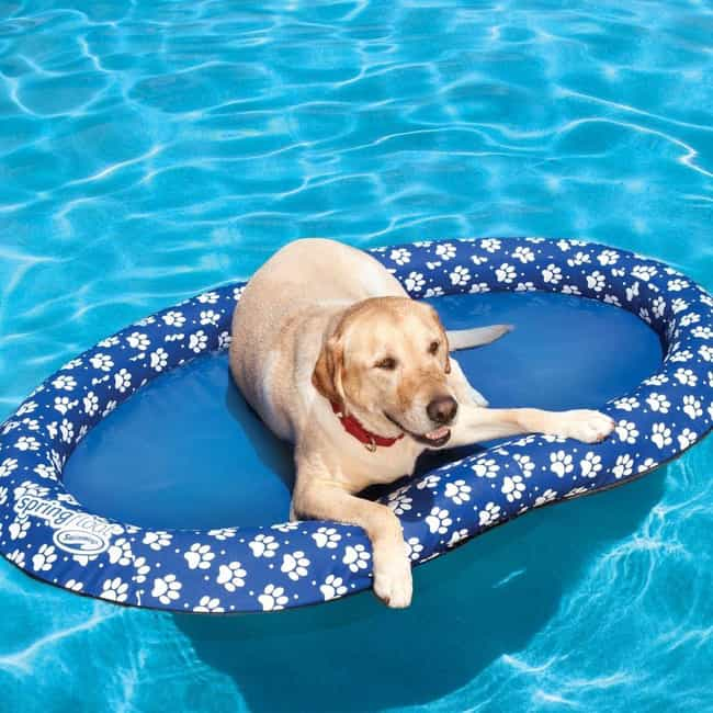Pool Float for Puppies ... is listed (or ranked) 2 on the list Fun Pool Toys And Outdoor Accessories That Will Make Your Backyard Feel Like A Vacation