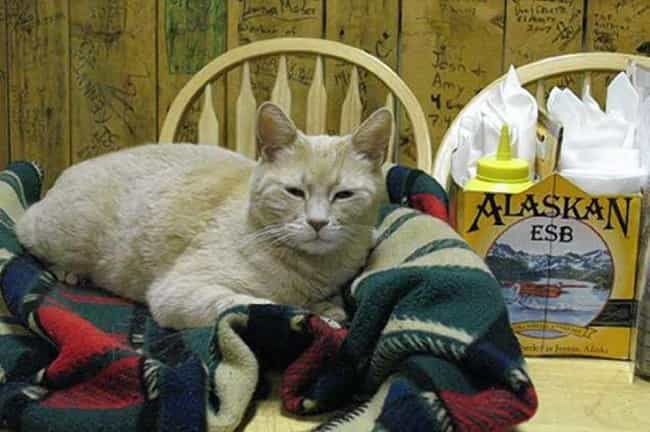 Stubbs the Cat is listed (or ranked) 2 on the list The 21 Animals Who Ran for Public Office