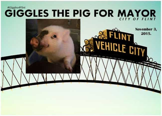 Giggles the Pig is listed (or ranked) 3 on the list The 21 Animals Who Ran for Public Office