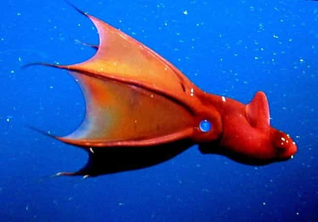 The Vampire Squid Can Tu... is listed (or ranked) 4 on the list Pretty Cool And Kind Of Scary Facts About Ocean Creatures