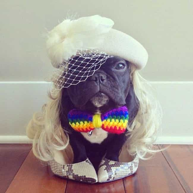 """""""What Kind of Beast Would ... is listed (or ranked) 2 on the list Dogs All Decked Out in Gay Pride Apparel"""