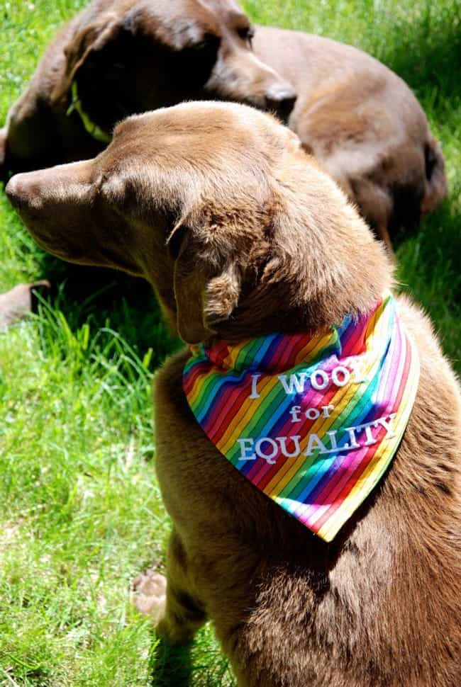 We Stand by This Man and His W... is listed (or ranked) 4 on the list Dogs All Decked Out in Gay Pride Apparel