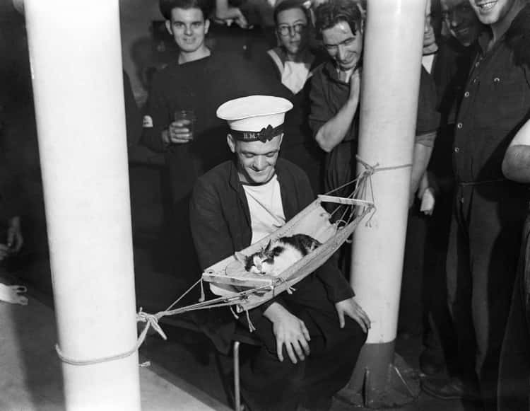 The Tiniest Member Of The Royal Navy With His Pals, 1941