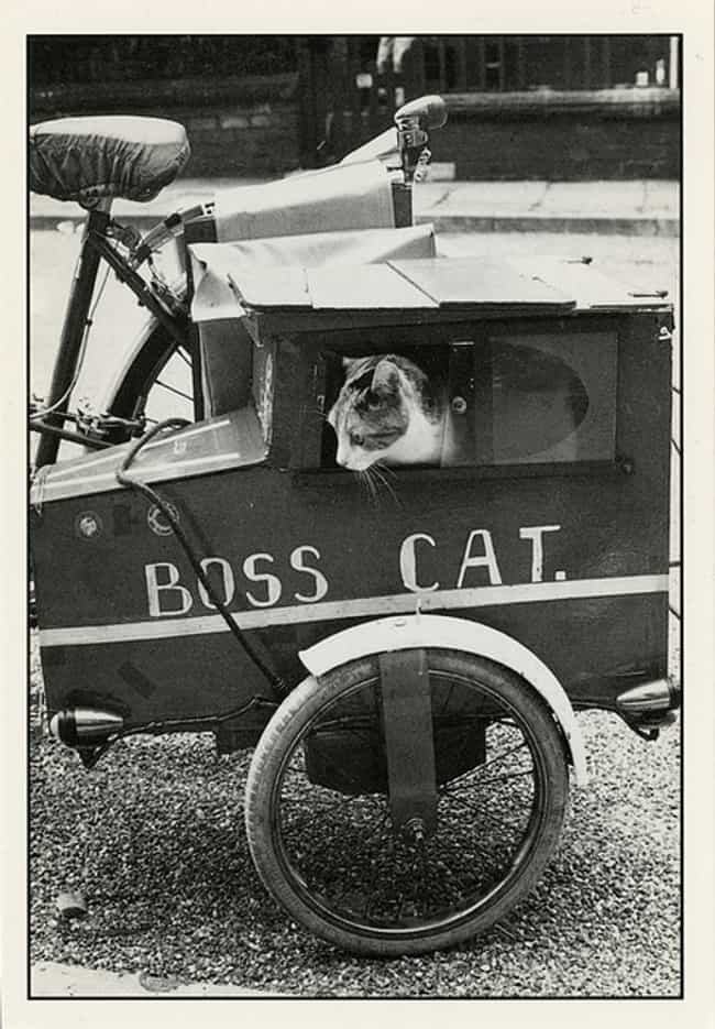 Like a Boss! is listed (or ranked) 4 on the list 50 Adorable Pictures of Cats Throughout History