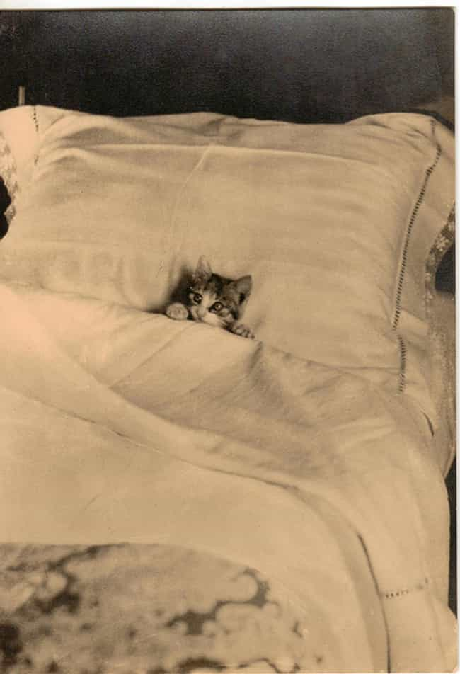 Proof That Bed Theiving Is Not... is listed (or ranked) 2 on the list 50 Adorable Pictures of Cats Throughout History