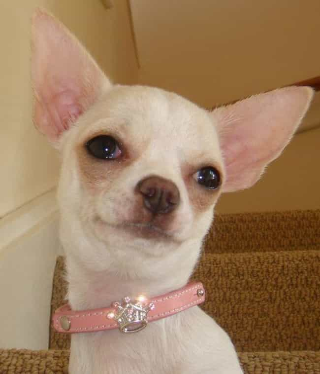 A Little Bling Never Hur... is listed (or ranked) 4 on the list Dogs So Ugly They Are Cute