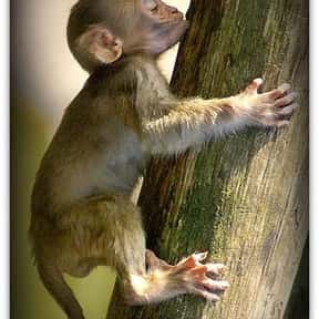 What Do You Call A Baby Monkey is listed (or ranked) 20 on the list The Best Good, Clean Jokes