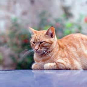 What Do You Call a Cat In a St is listed (or ranked) 11 on the list The Best Cat Jokes