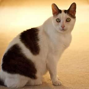What Looks Like Half A Cat? is listed (or ranked) 16 on the list The Best Cat Jokes