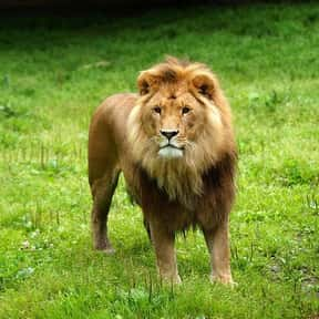 What Happened To The Lion Who  is listed (or ranked) 8 on the list The Best Cat Jokes