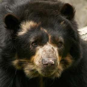 What Do You Call A Bear Withou is listed (or ranked) 5 on the list The Best Bear Jokes