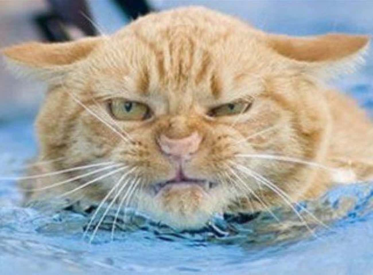 This Cat Can't Even Begin To Handle This Swimming Pool's Evil Right Now!