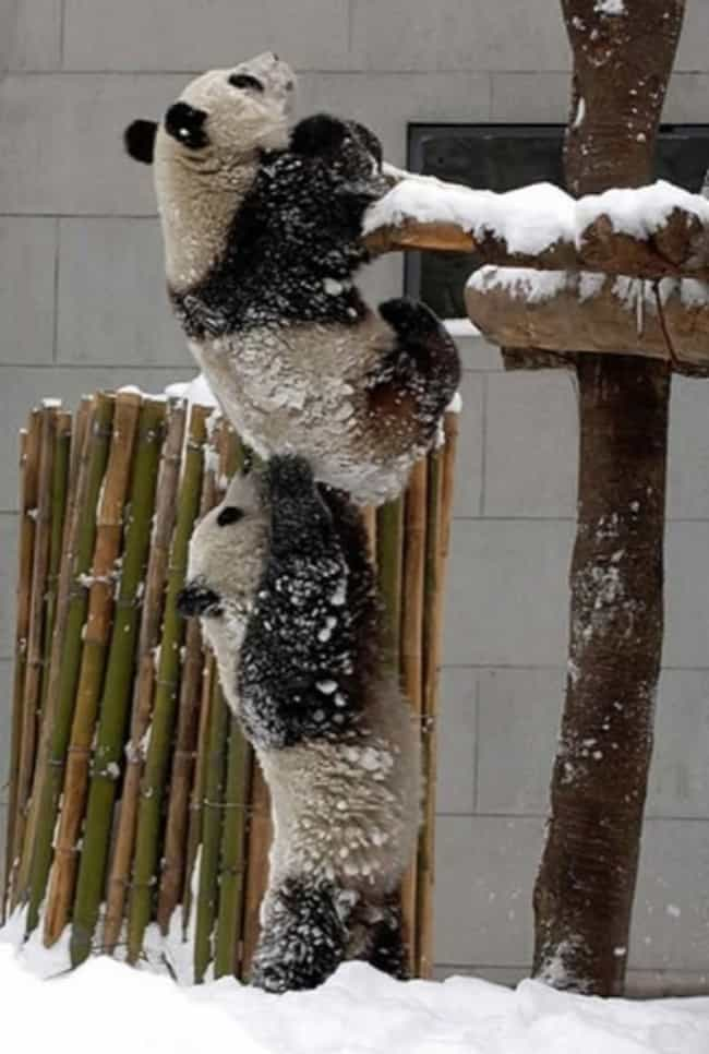 """Climb, Bro!"" is listed (or ranked) 4 on the list The Most Adorable Examples of Animal Teamwork"