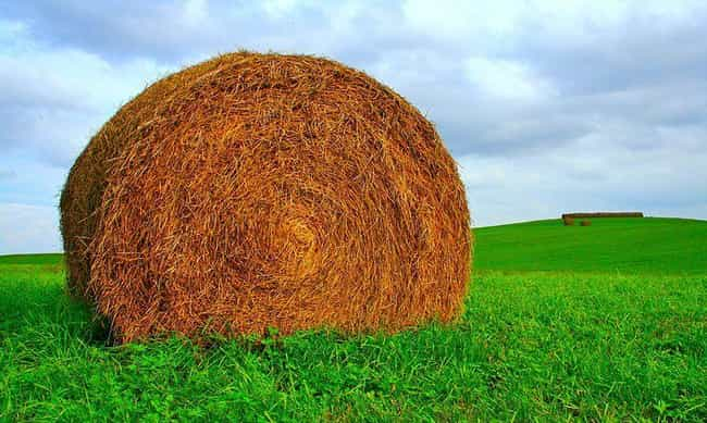 Bale of Hay is listed (or ranked) 4 on the list Strange Deaths Caused by Everyday Objects