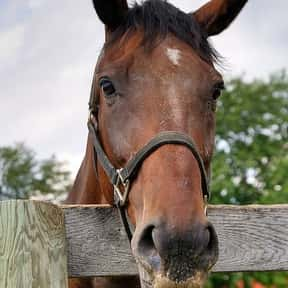 How Do You Get A Horse Drunk? is listed (or ranked) 18 on the list The Best Horse Jokes