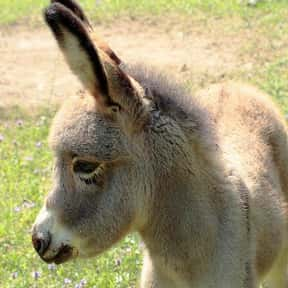 What Do You Call A Baby Donkey is listed (or ranked) 5 on the list The Best Horse Jokes