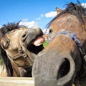 Why Did The Horse Eat With His is listed (or ranked) 16 on the list The Best Horse Jokes