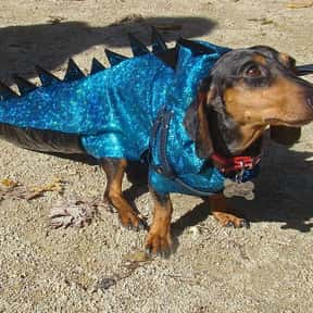 Who Makes Dinosaur Clothes? is listed (or ranked) 10 on the list The Best Dinosaur Jokes