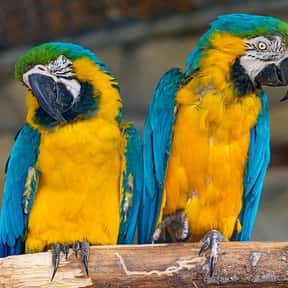 What's the Difference Between a Tenor Sax and a Macaw?