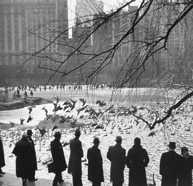 Central Park, 1943 is listed (or ranked) 1 on the list 40 Beautiful Old New York Photos