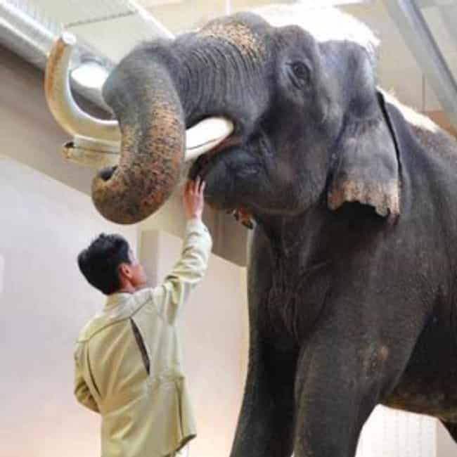 Elephants Can Speak Korean is listed (or ranked) 1 on the list 24 Sort of Creepy Ways Animals Are Like Humans