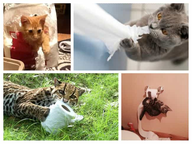 Toilet Paper Can Be Tantalizin... is listed (or ranked) 4 on the list 30 Things Cats Prefer Over Your Fancy Gifts