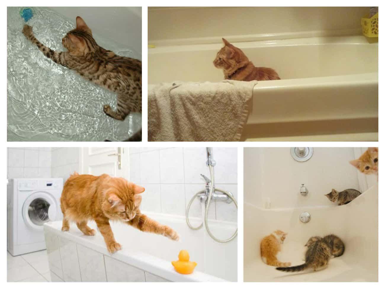 Bathtubs Are More Popular Than is listed (or ranked) 3 on the list 30 Things Cats Prefer Over Your Fancy Gifts