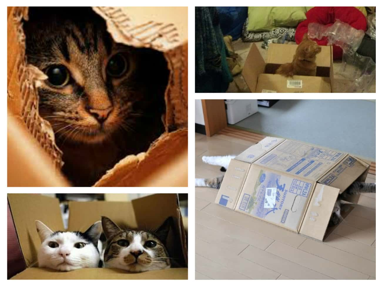 Excitement Is Only a Cardboard is listed (or ranked) 1 on the list 30 Things Cats Prefer Over Your Fancy Gifts