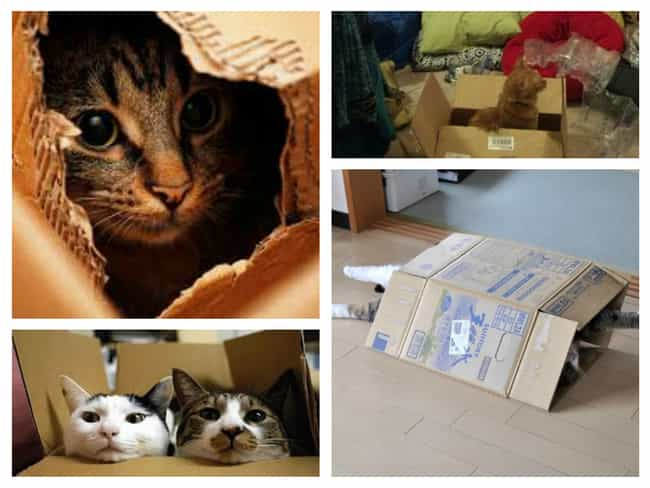Excitement Is Only a Cardboard... is listed (or ranked) 1 on the list 30 Things Cats Prefer Over Your Fancy Gifts