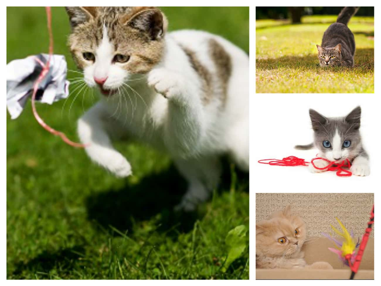 Pretty Much Anything You Drag  is listed (or ranked) 2 on the list 30 Things Cats Prefer Over Your Fancy Gifts