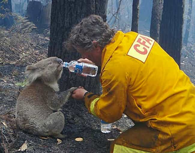 Australian Fireman Helps a Thi... is listed (or ranked) 1 on the list 33 Moments That'll Restore Your Faith in Humanity
