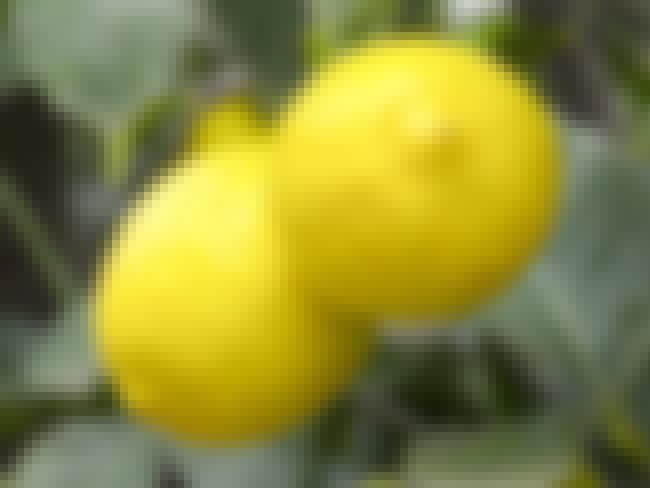 """Lemons is listed (or ranked) 2 on the list Weird """"Birth Control"""" Methods from Around the World"""