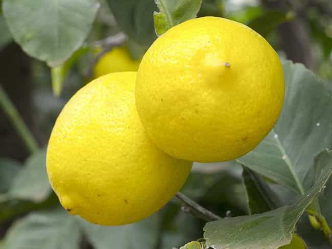 """Lemons is listed (or ranked) 2 on the list Weird """"Birth Control"""""""