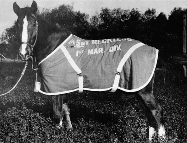 Sergeant Reckless is listed (or ranked) 3 on the list The Most Decorated Animals in the Military