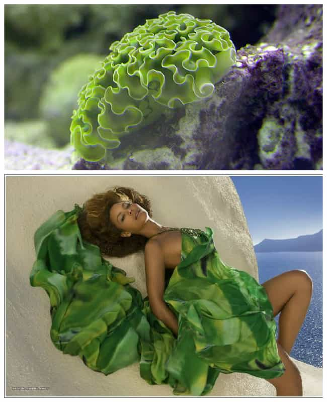 Green Ribbon Nudibranch is listed (or ranked) 4 on the list The Most Beautiful High Fashion Nudibranchs