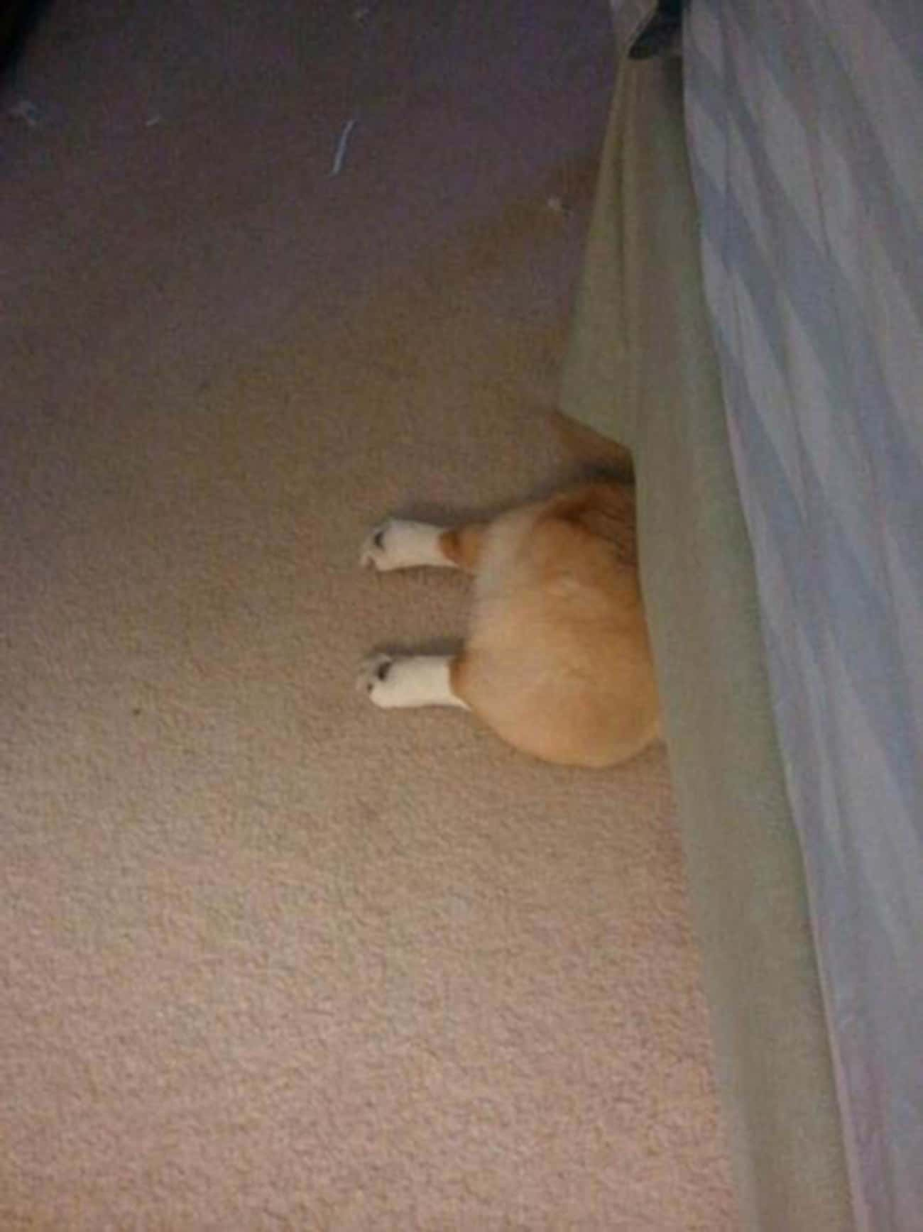 Stealth Tip: Hiding Is No Time is listed (or ranked) 4 on the list 22 Dogs Who Think They're Hiding