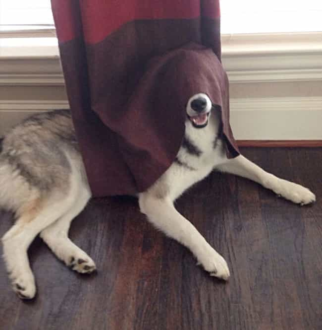Stealth Tip: Just Because You ... is listed (or ranked) 4 on the list 29 Dogs Who Think They're Hiding