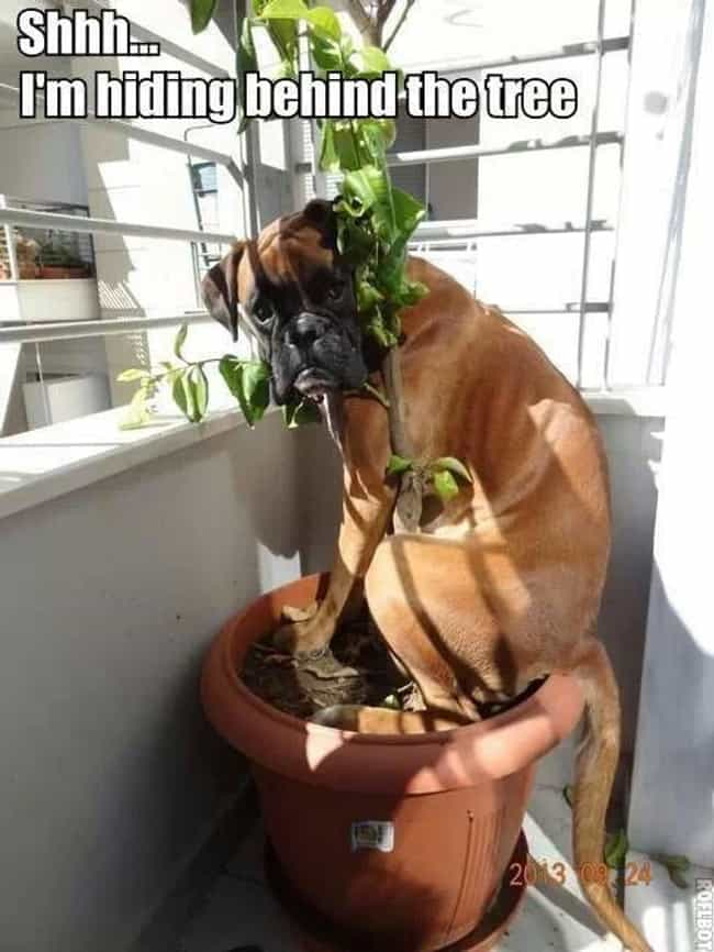 Stealth Tip: Camo Is a Great T... is listed (or ranked) 1 on the list 29 Dogs Who Think They're Hiding