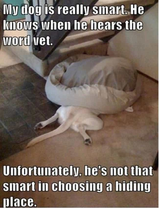 Stealth Tip: When Hiding Under... is listed (or ranked) 3 on the list 29 Dogs Who Think They're Hiding