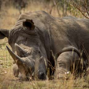 Poaching is listed (or ranked) 25 on the list The Social Issues You Care About Most
