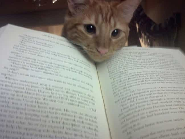 """""""Hey, Whachu Doin'?... is listed (or ranked) 2 on the list 41 Cats That Would Like Some Attention, Please"""