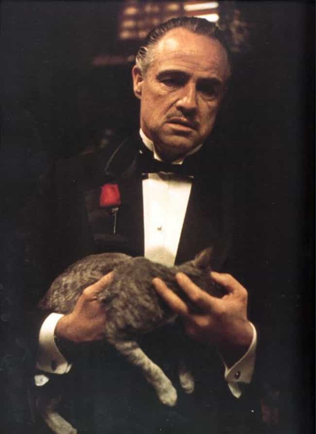 The Cat Wasn't in the Or... is listed (or ranked) 2 on the list 20 Fun Facts About the Godfather Trilogy