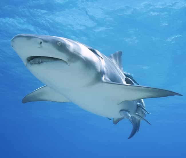 The Most Horrifying Shark Attacks Ever Recorded