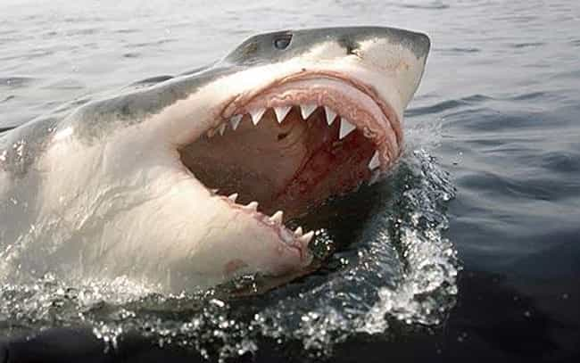 Shark Attacks Are Much More Co... is listed (or ranked) 1 on the list Shark Attack Myths and Facts... Debunked!