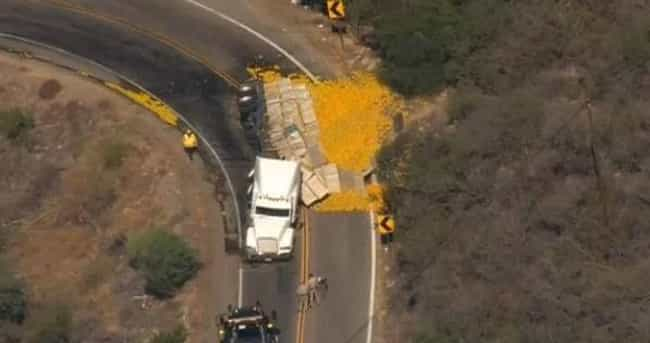 Thousands of Oranges is listed (or ranked) 4 on the list 20 Weird Cargo Spills You Can't Help But Gawk At