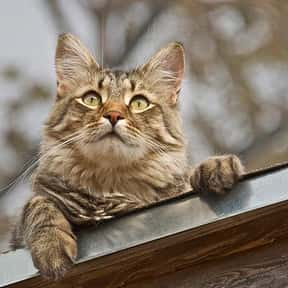 What's It Called When A Cat Wi is listed (or ranked) 17 on the list The Funniest Jokes For Kids
